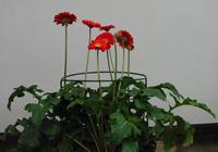 Blumenstützen