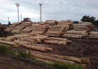 Holzaufkauf und – verkauf